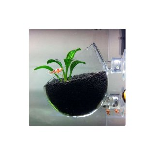 Aquarien extras wima ihr gro handel f r for Pflanzen im glas