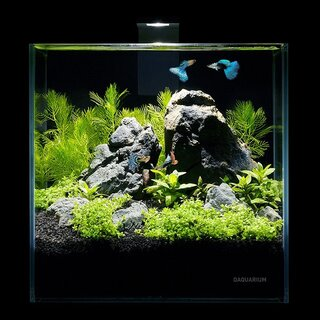 Collar AquaLighter Aquarium Set Pico 5 l
