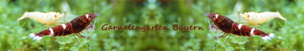 www.garnelenshop-bayern.de